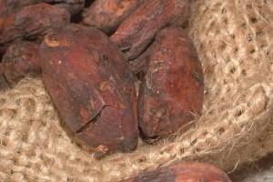 Kakaobohnen unbehandelt